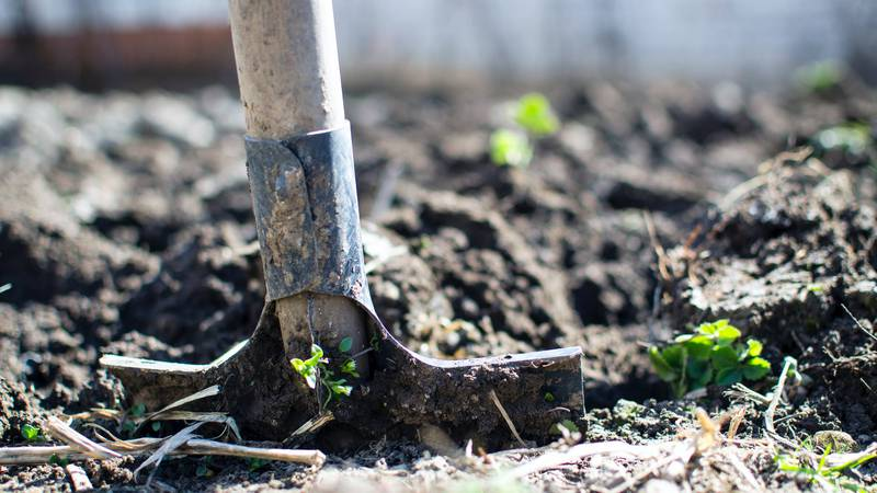 East Texas Ag News: Fall chores in the landscape