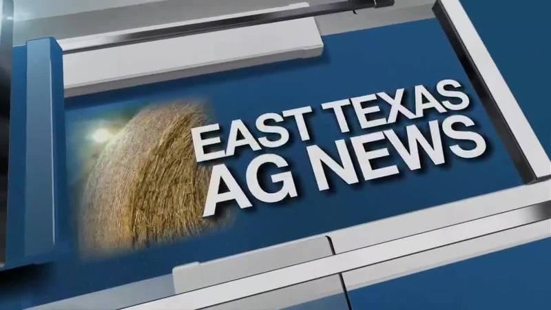 East Texas Ag News: Texas Hay Report