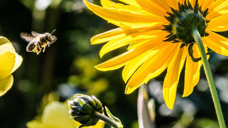 East Texas Ag News: Winter's dearth affects bees, livestock, wildlife