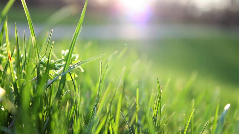 There are a number of insects that can wreak havoc on turfgrass and cause it to be unsightly.