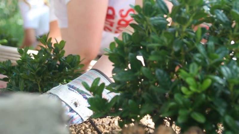 Bullard ISD seniors help replant flowerbeds after the winter storms.