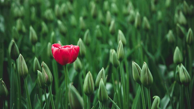 Time to divide bulbs and perennials