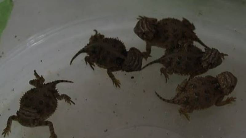 204 captive-raised hatchlings were just released into the wild