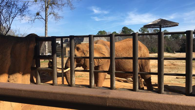 Elephant eating out of forage feeder made of fire hose.