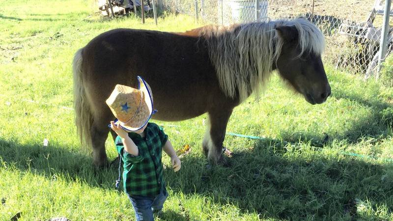Debbie says the miniature horse, Lisa, was like a member of her family.