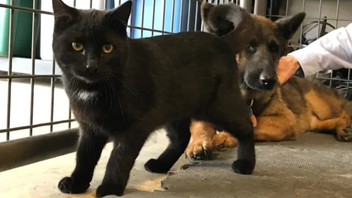 Meet Libby and Gizmo. They?re a dog and a cat who?ve defied the odds to become the best of...