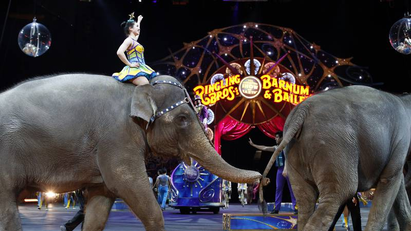 Elephants walk during a performance of the Ringling Bros. and Barnum & Bailey Circus, Thursday,...
