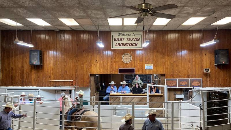 A special cattle replacement sale took place in Crockett Saturday.