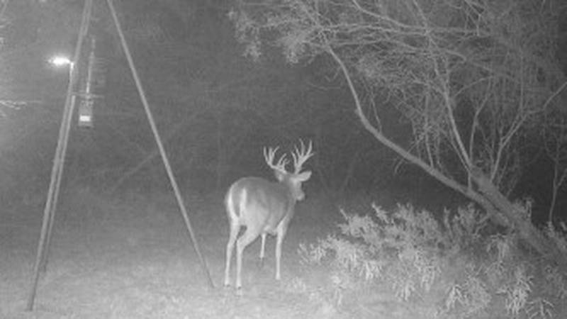 Over 9,000 accidents occurred involving wildlife in Texas during 2018