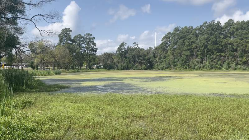 Algae problem growing on Jones Lake