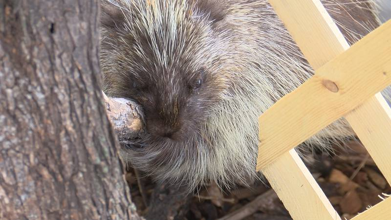 The Wildlife Rehabilitation Center got national attention on social media after they posted a...