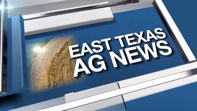 East Texas Ag News: Time to start planning for the fall garden
