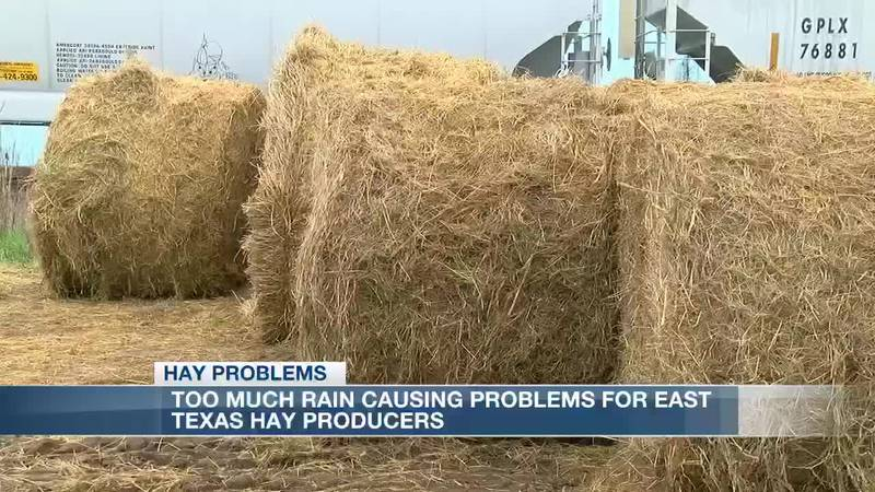Excess rainfall could cause problems for East Texas hay production KLTV